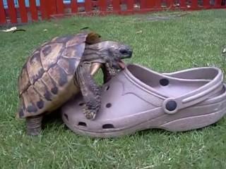 cute Turtle dude bangs hot young shoe
